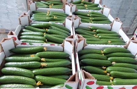 Готовый урожай на продажу