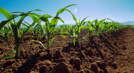 Постоянно рыхлите почву в жаркие дни