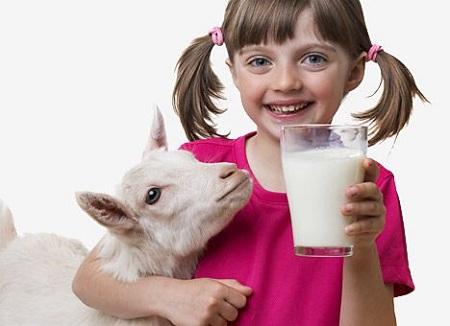 Для детей козье молоко полезней