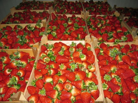 Сельский бизнес сегодня переживает расцвет