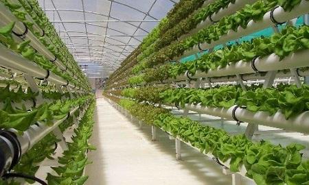 От условий в теплицы зависит урожайность