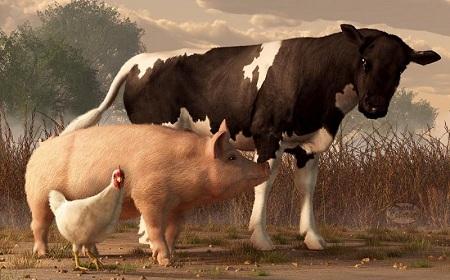 Разведение домашних животных - сложный, но интересный бизнес