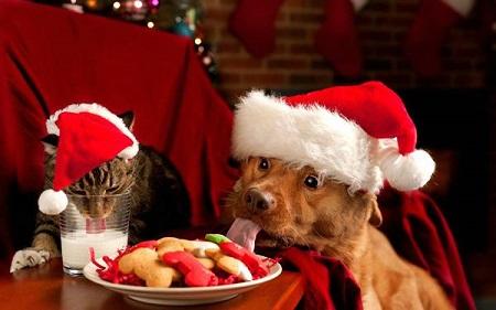 Домашние животные тоже имеют право на праздник