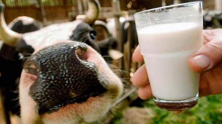 Со временем вместо одной коровы у вас будет целая ферма
