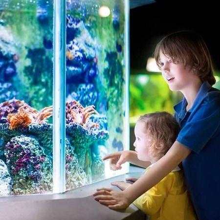 Наблюдать за жителями аквариума любят и взрослые, и дети