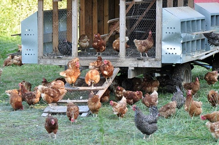 Бизнес на куриных яйцах