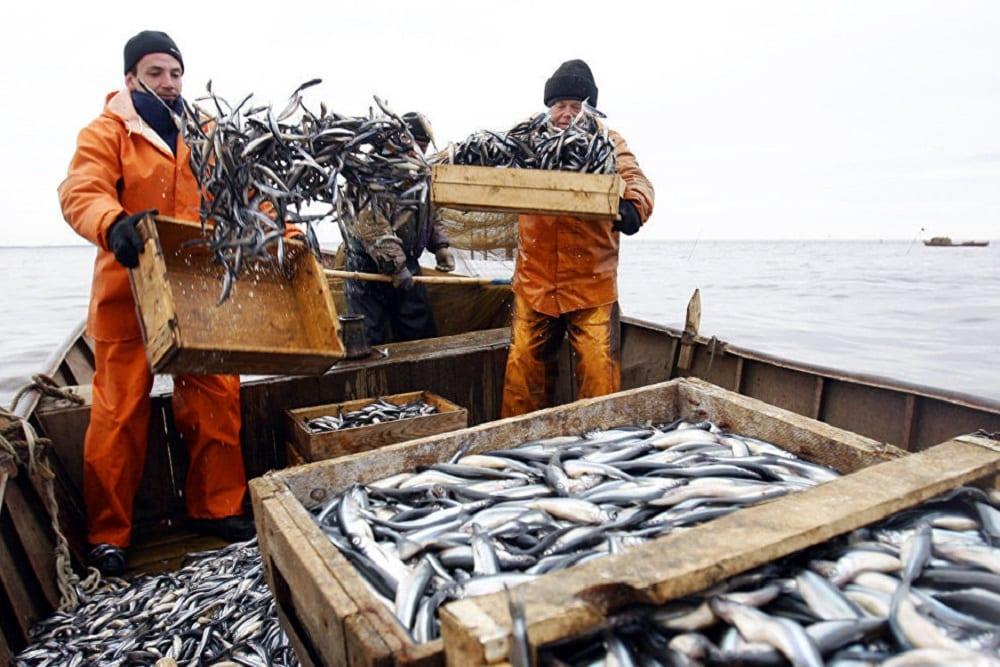 Поставщики рыбы