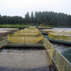 Оборудование для рыбного бизнеса
