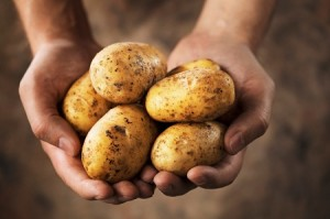 Выращивание картофеля рентабельность 69