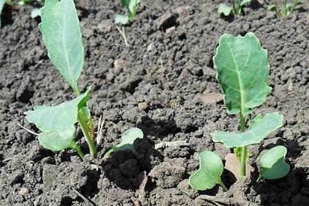 Выбор способа выращивания очень важен