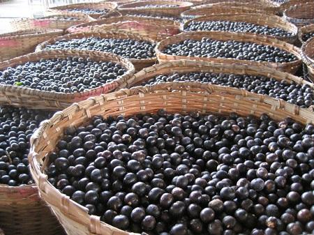 Только вручную собранная ягода ценится больше всего