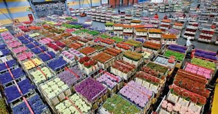 Оптовая цветочная база