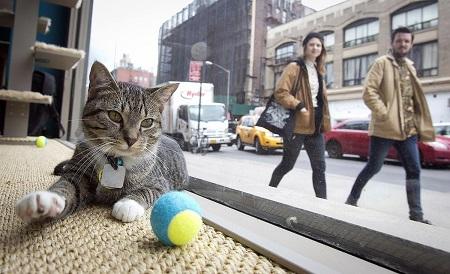 Приглянувшуюся кошку посетитель может забрать к себе домой