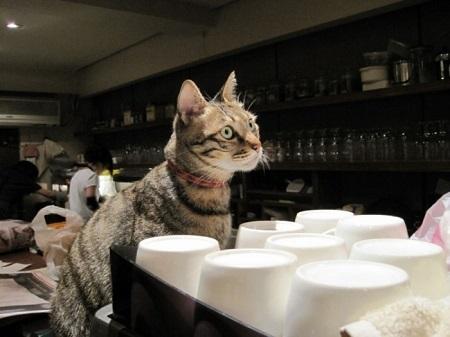 Помощник бармена