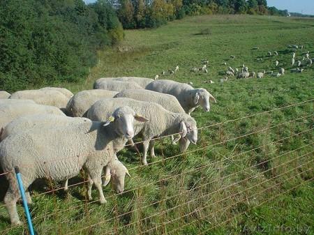 Площадь пастбища и количество овец взаимосвязаны