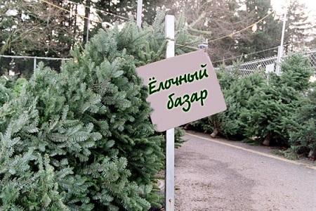 В каждом доме должна быть елка