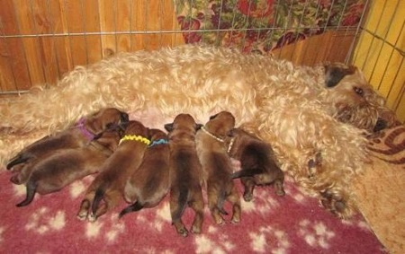 Разводить собак - нелегкий труд