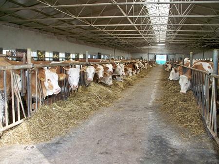 Ферма для коров не требует особых вложений