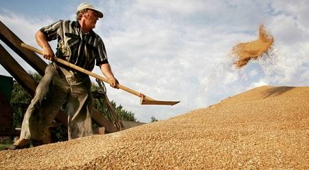 Трейдеры интересуются большими объемами зерновых культур
