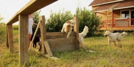 Крупным собакам нужен качественный выгул несколько раз в день