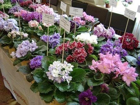 рассаживание цветков