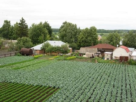 Выращивание овощей на продажу